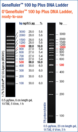Generuler 100bp Dna Ladder Plus Abo Odczynniki I