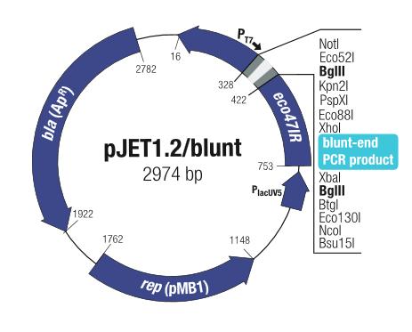 Clonejet Pcr Cloning Kit Abo Odczynniki I Wyposażenie