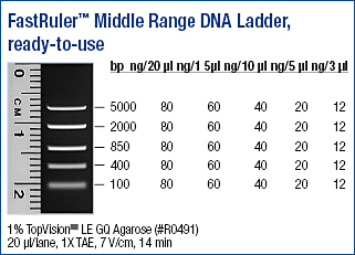 Fastruler Dna Ladder Middle Range Ready To Use Abo
